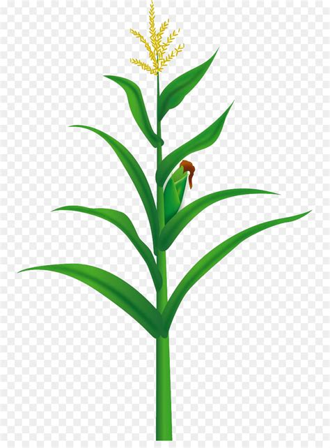 Maize Food Illustration - Yellow corn tree png download