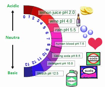 The importance and properties of the bases (alkalis