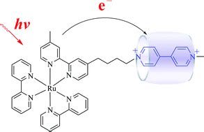 The photoinduced long-lived charge-separated state of Ru