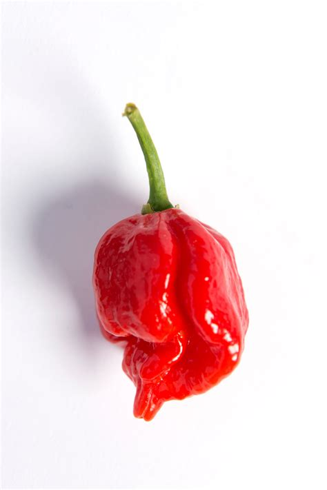 Hottest chillies in the world: the Scoville scale – in