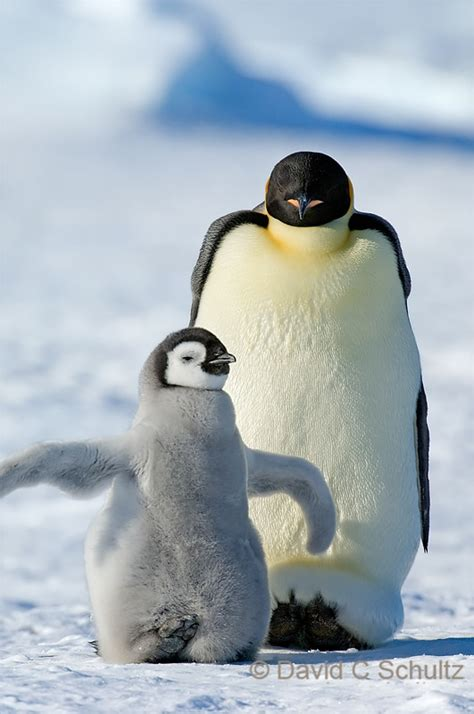 penguins photo gallery